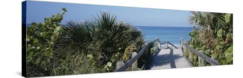 Plants on Both Sides of a Boardwalk, Caspersen Beach, Venice, Florida, USA--Stretched Canvas Print