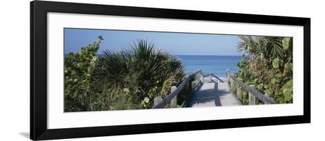 Plants on Both Sides of a Boardwalk, Caspersen Beach, Venice, Florida, USA--Framed Art Print
