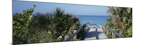 Plants on Both Sides of a Boardwalk, Caspersen Beach, Venice, Florida, USA--Mounted Photographic Print