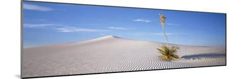 Soaptree Yucca, White Sands National Monument, New Mexico, USA--Mounted Photographic Print