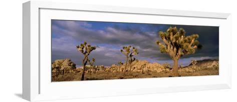 Joshua Tree National Park, California, USA--Framed Art Print