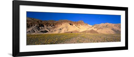 Wild Flowers Grown in the Valley, Death Valley National Park, Nevada, California, USA--Framed Art Print