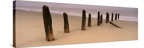 Logs on the Beach, Spurn, Yorkshire, England, United Kingdom--Stretched Canvas Print