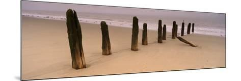 Logs on the Beach, Spurn, Yorkshire, England, United Kingdom--Mounted Photographic Print