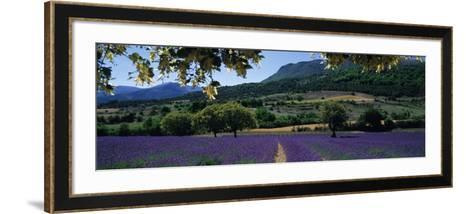 Mountain Behind a Lavender Field, Provence, France--Framed Art Print