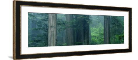 Trees in a Forest, Redwood National Park, California, USA--Framed Art Print