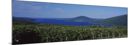 Vineyards Near a Lake, Canandaigua Lake, Finger Lakes, New York State, USA--Mounted Photographic Print