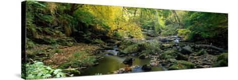 Stream Flowing Through Forest, Eller Beck, England, United Kingdom--Stretched Canvas Print