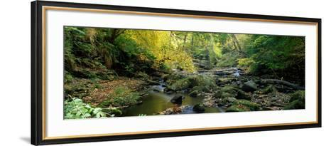 Stream Flowing Through Forest, Eller Beck, England, United Kingdom--Framed Art Print