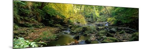 Stream Flowing Through Forest, Eller Beck, England, United Kingdom--Mounted Photographic Print