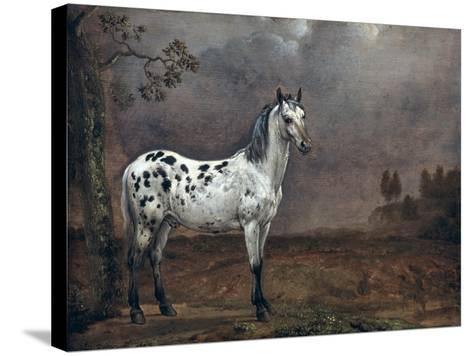 The Piebald Horse, 1653-Paulus Potter-Stretched Canvas Print
