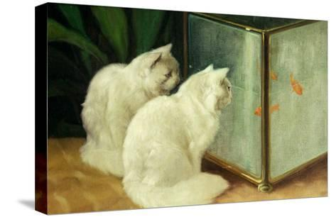 White Cats Watching Goldfish-Arthur Heyer-Stretched Canvas Print