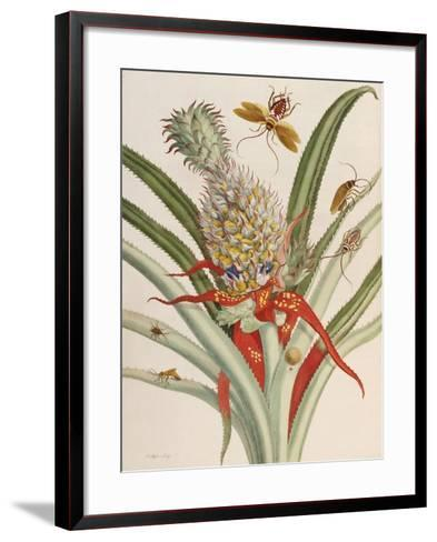 Pineapple (Ananas) with Surinam Insects-Maria Sibylla Merian-Framed Art Print