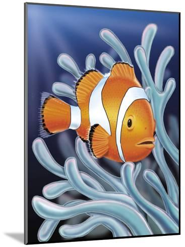 A Clown Fish Swimming by Sea Anemones--Mounted Art Print
