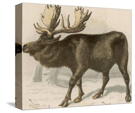 Moose or Elk--Stretched Canvas Print