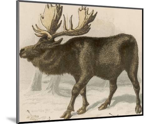 Moose or Elk--Mounted Giclee Print