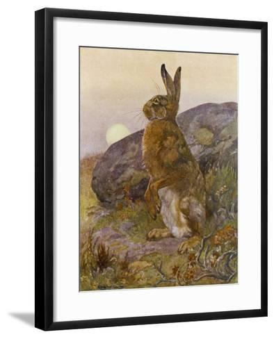 Lepus Europaeus a Hare Sits up on Its Back Legs-Winifred Austen-Framed Art Print