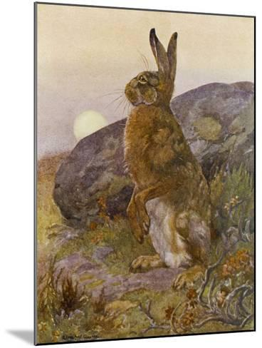 Lepus Europaeus a Hare Sits up on Its Back Legs-Winifred Austen-Mounted Giclee Print
