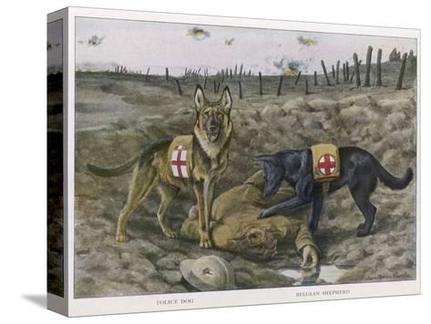 Two Red Cross Rescue Dogs a German Shepherd-Louis Agassiz Fuertes-Stretched Canvas Print