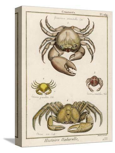 Gecarcinus Anisochele and Other Crabs-Benard-Stretched Canvas Print