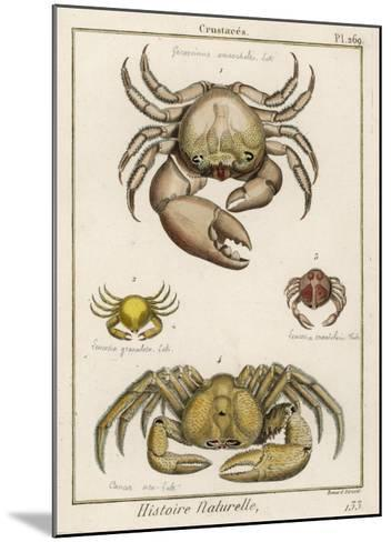 Gecarcinus Anisochele and Other Crabs-Benard-Mounted Giclee Print