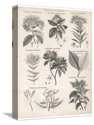 Varieties of the Cinchona Species-Barlow-Stretched Canvas Print