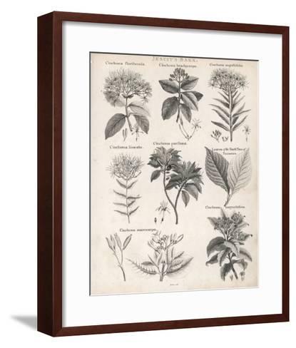 Varieties of the Cinchona Species-Barlow-Framed Art Print