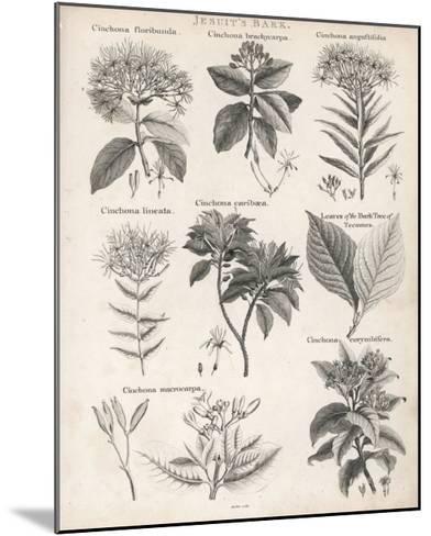 Varieties of the Cinchona Species-Barlow-Mounted Giclee Print