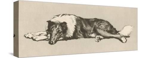 Collie Dog Relaxes-Cecil Aldin-Stretched Canvas Print