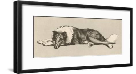 Collie Dog Relaxes-Cecil Aldin-Framed Art Print