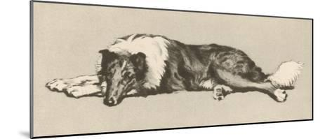 Collie Dog Relaxes-Cecil Aldin-Mounted Giclee Print