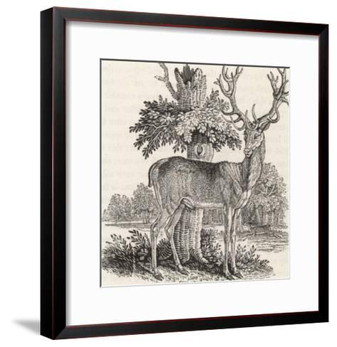 The Stag or Red-Deer (Cervus Elephas) This is the Most Beautiful Animal of the Deer Kind-Thomas Bewick-Framed Art Print