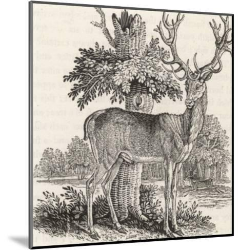 The Stag or Red-Deer (Cervus Elephas) This is the Most Beautiful Animal of the Deer Kind-Thomas Bewick-Mounted Giclee Print