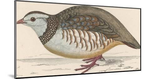 Barbary Partridge-Reverend Francis O^ Morris-Mounted Giclee Print