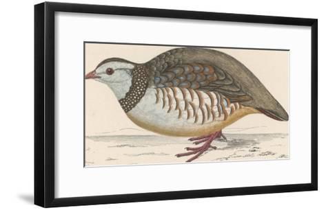 Barbary Partridge-Reverend Francis O^ Morris-Framed Art Print
