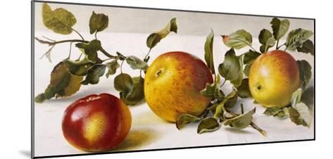 Apples and a Bit of Foliage- Moettler-Mounted Giclee Print