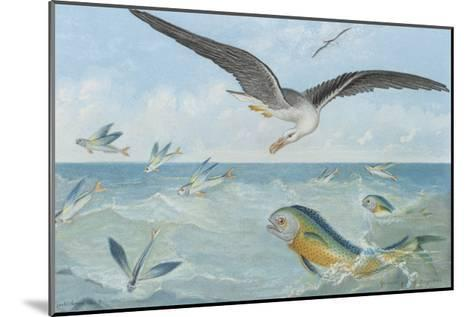 An Albatross at Sea Preying on Flying Fish-P. Lackerbauer-Mounted Giclee Print