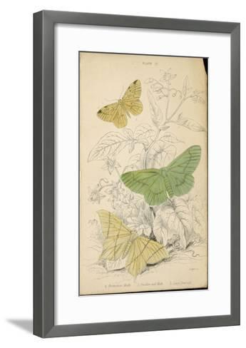 Brimstone Moth Swallowtail Moth Large Emerald- Lizars-Framed Art Print