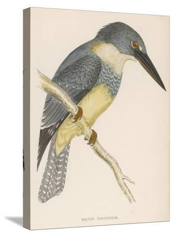 North American Belted Kingfisher-Reverend Francis O^ Morris-Stretched Canvas Print