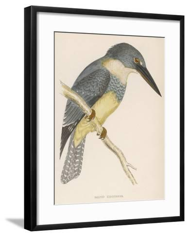 North American Belted Kingfisher-Reverend Francis O^ Morris-Framed Art Print