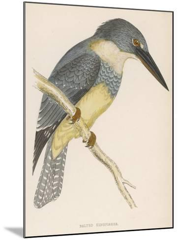 North American Belted Kingfisher-Reverend Francis O^ Morris-Mounted Giclee Print