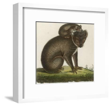 Koala Bear Carrying Its Young- Lecerf-Framed Art Print