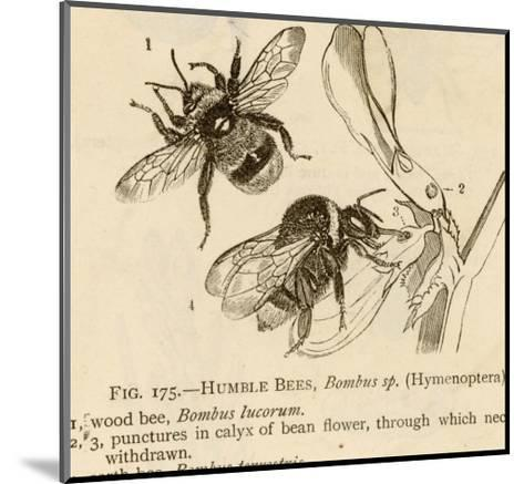 Humble Bees--Mounted Giclee Print