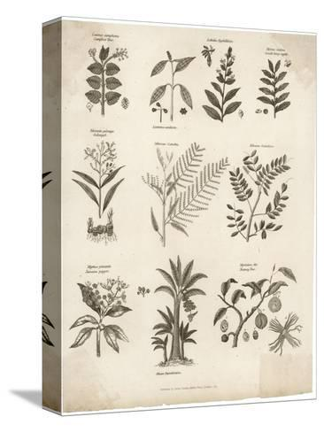 Mimosa Pepper Nutmeg Camphor and Other Herbs and Plants--Stretched Canvas Print