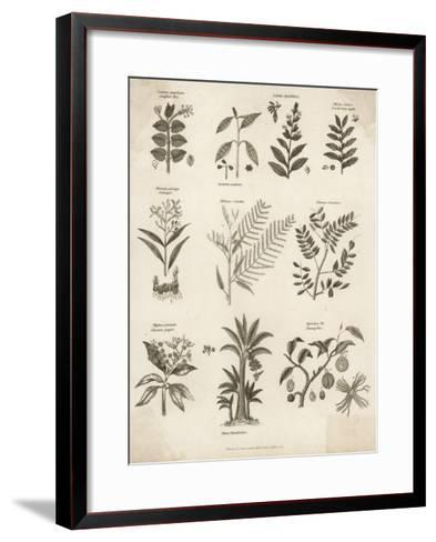 Mimosa Pepper Nutmeg Camphor and Other Herbs and Plants--Framed Art Print