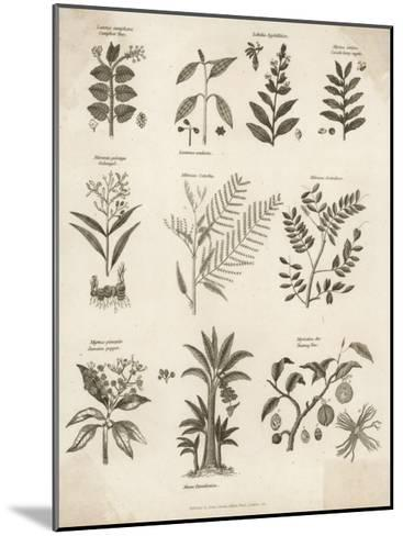 Mimosa Pepper Nutmeg Camphor and Other Herbs and Plants--Mounted Giclee Print