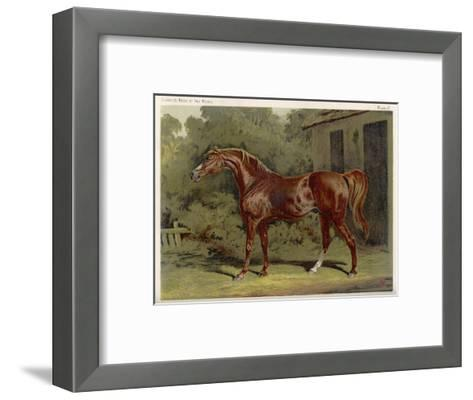 """Great-Grandson of """"Darley Arabian"""" Raced 1769-1770 in 18 Races All of Which He Won--Framed Art Print"""