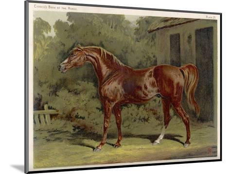 """Great-Grandson of """"Darley Arabian"""" Raced 1769-1770 in 18 Races All of Which He Won--Mounted Giclee Print"""