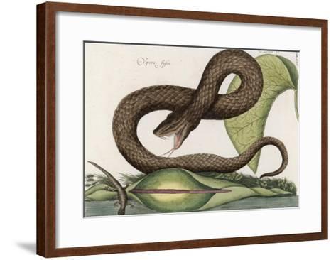 Vipera Fusca a Vicious Viper--Framed Art Print