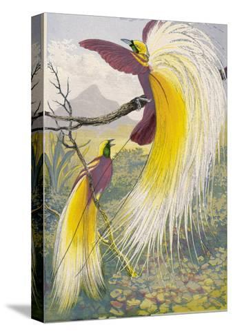 Bird of Paradise--Stretched Canvas Print
